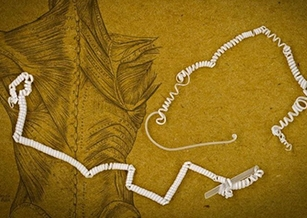 從黃瓜藤蔓獲靈感 MIT研發出特殊仿人造肌肉纖維